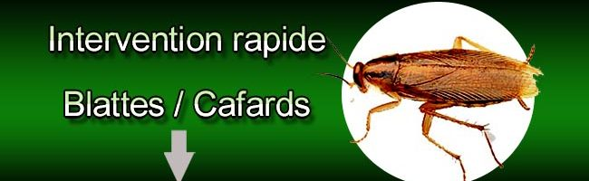 Intervention rapide blattes, cafards, Iratech France