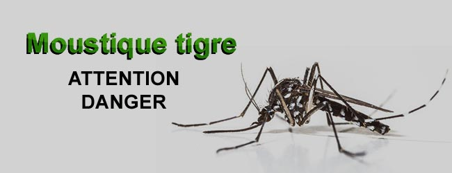 Intervention Moustiques tigres