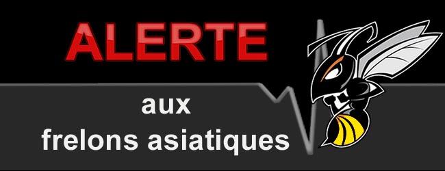 Alerte frelons asiatiques Toulon