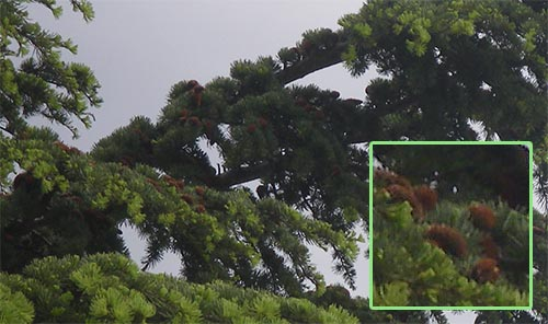 nids de chenilles