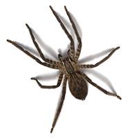 Service anti araignées