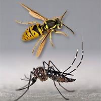 Désinsectisation frelons, frelons asiatiques, moustiques, La Crau, Toulon