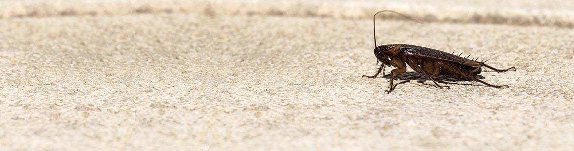 Désinfection cafards et blattes Toulon